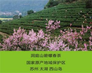 国家原产地洞庭山碧螺春茶