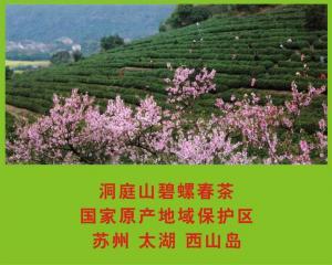 原产地洞庭山碧螺春茶